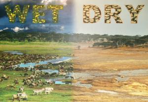 Vogeltränke tansania der norden